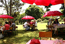 Kiambethu tea farm lunch