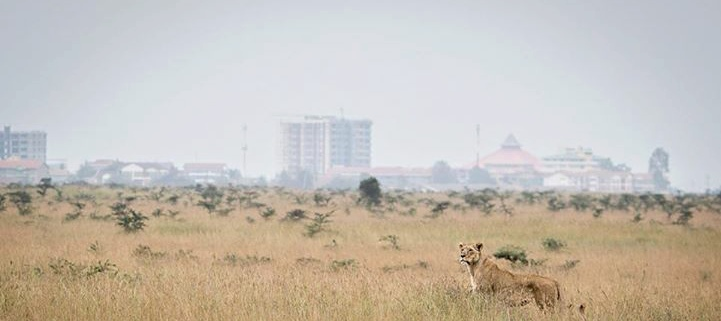 Nairobi National Park Tours And Excursions